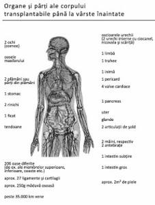 Transplantierbare Organe_rom