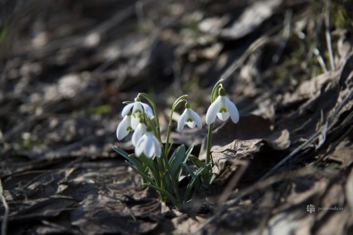 """""""Răsărit-a primăvara Postului şi floarea pocăinţei"""""""