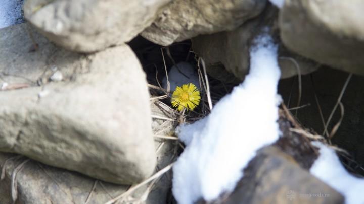 Radu Gyr – Florii